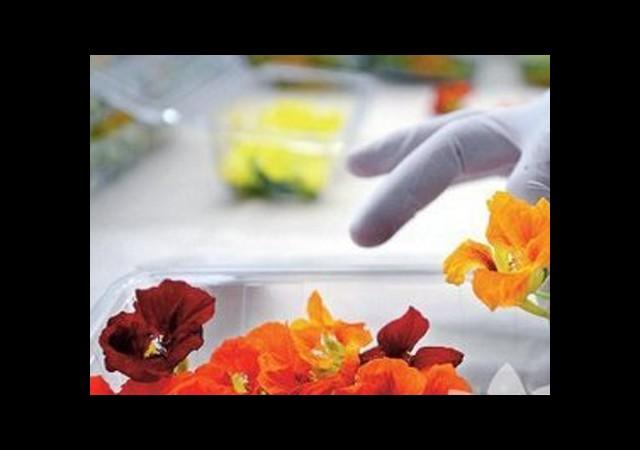 İstanbul Sosyetesi Artık Çiçek Yiyor