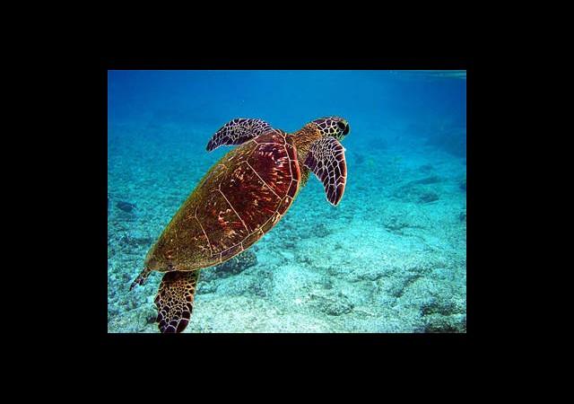 Deniz Kaplumbağalarının Hayatı Beyazperdeye Taşınıyor