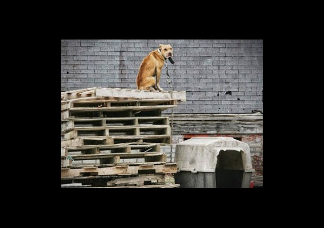 Binlerce Köpek Sokağa Atıldı!