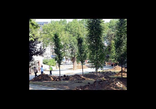 Gezi Parkı'na 100 Yetişkin Ağaç Dikildi
