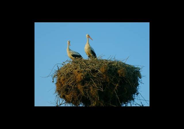 Göçmen Kuşlar Gelmeye Başladı