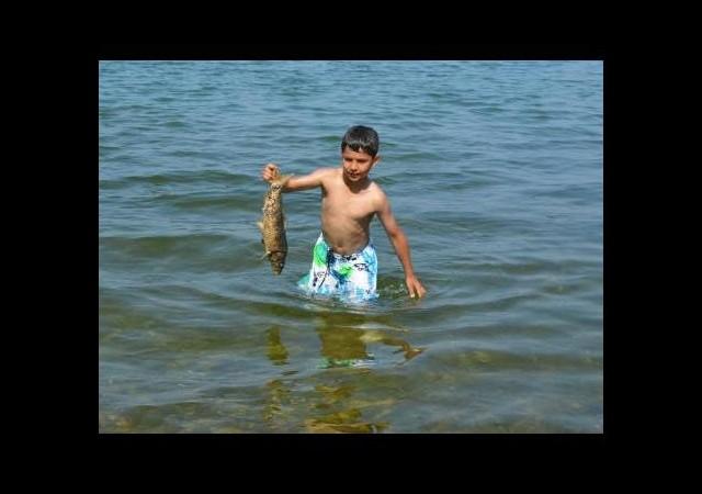 Kiloluk balıklar sahile vurdu