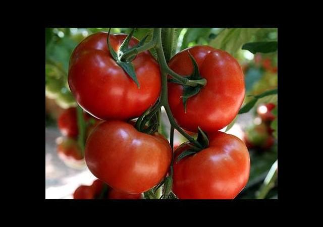 Organik diye 3 liralık domates 20 liraya satılıyor