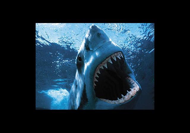Jaws'ın Babası Öldü