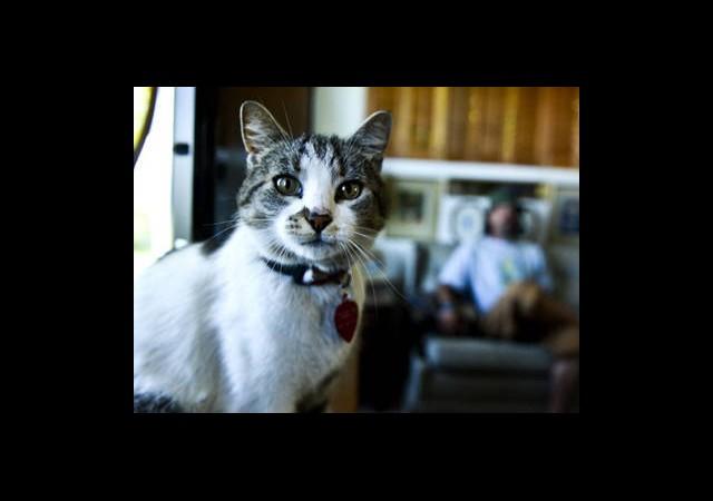 Otostopçu Kedi Yuvasına Döndü