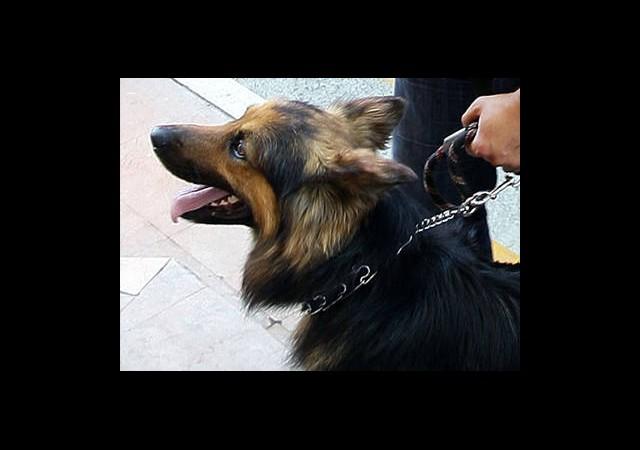 Cilvegözü'ne Bomba Uzmanı Köpek