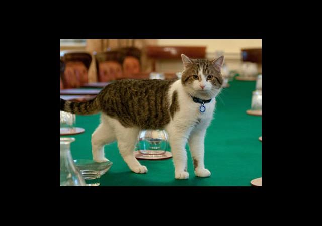 Başbakan First Kediyi İşten Attı!