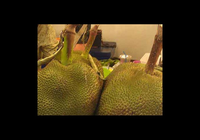 Dünyanın En Büyük Meyvesi!