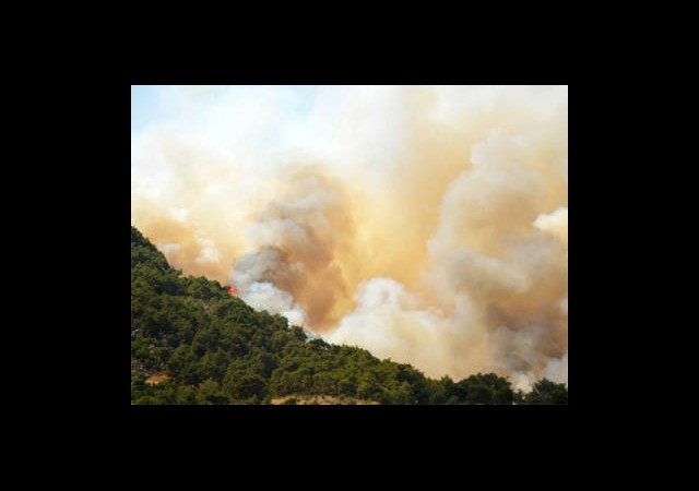 60 Hektar Ormanı Bakın Ne Yaktı?