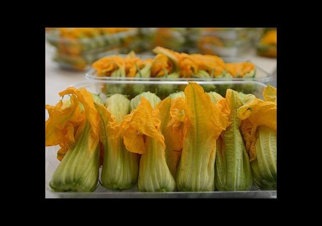 İstanbul Sosyetesine Çiçek Yediriyor