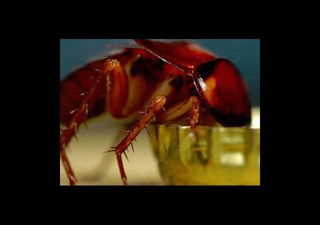1 Milyon Hamamböceği Kaçtı!