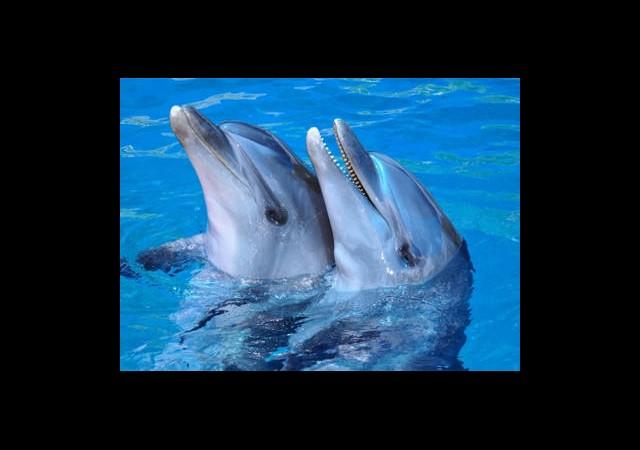 Yunusların Hafızası Fillerinkini Solladı
