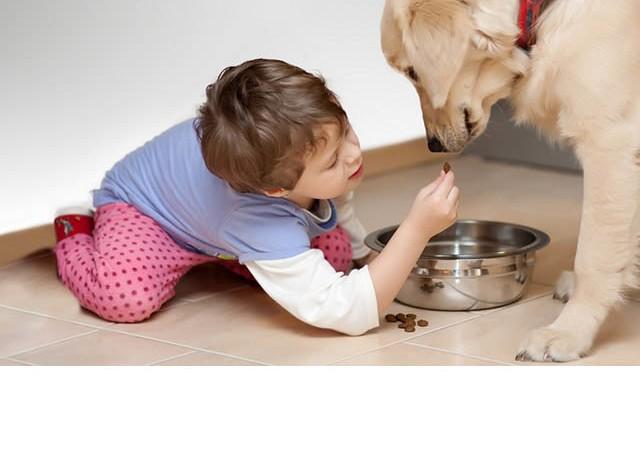 Evde hayvan beslemenin zararlı yönleri