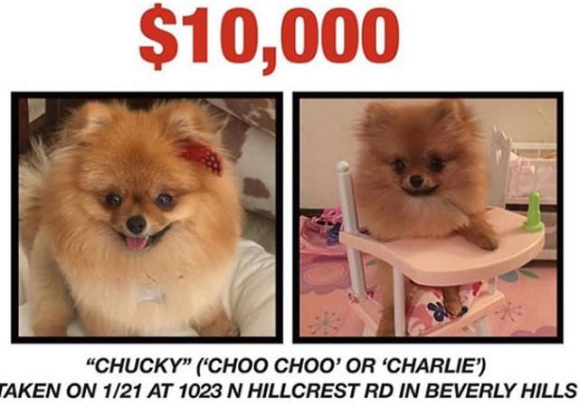 Kayıp köpeği bulana 10 bin dolar