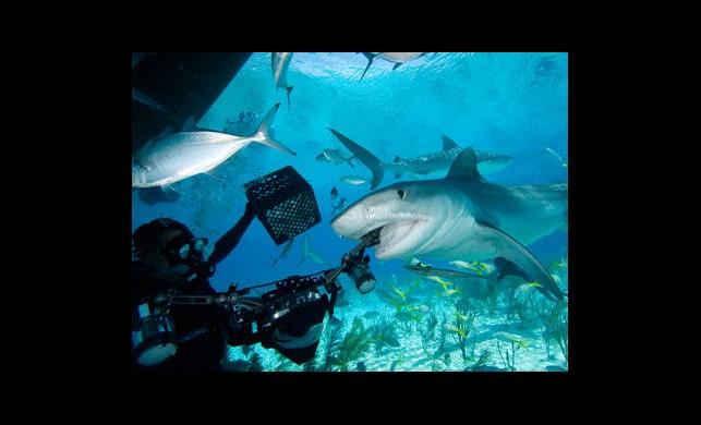 Avustralya'da Köpekbalığı Dehşeti