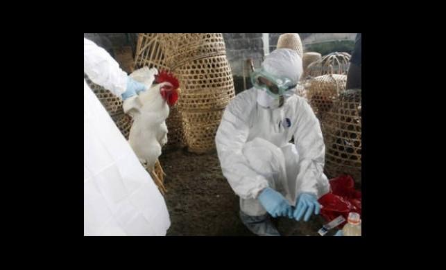 Çin'de Kuş Gribinden Ölenlerin Sayısı Artıyor