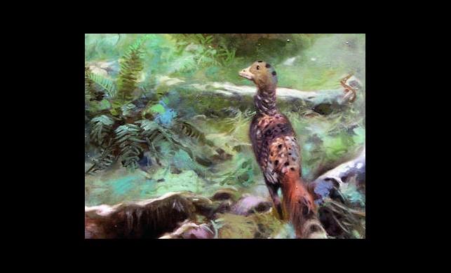 Dünyanın En Eski Kuşu Bulundu