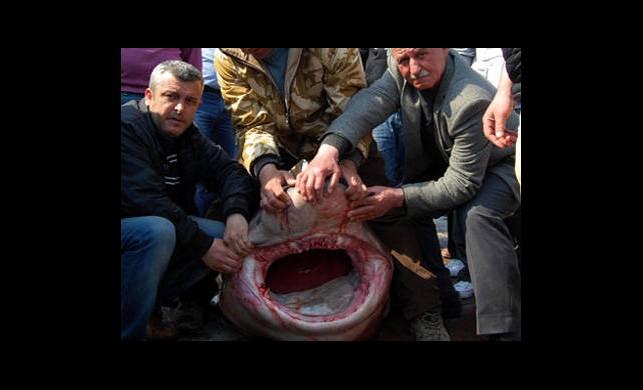 Marmara'da Bir Tonluk Canavar