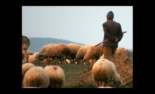 Bu okul çoban yetiştirecek