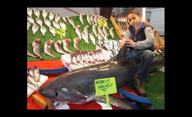 Dev köpekbalığı pazara indi!