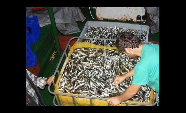 İşte yeni balık fiyatları!
