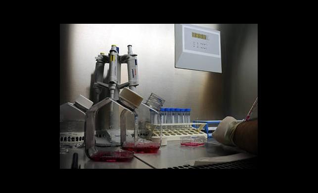 Felçli Hastalara Kök Hücre Umudu