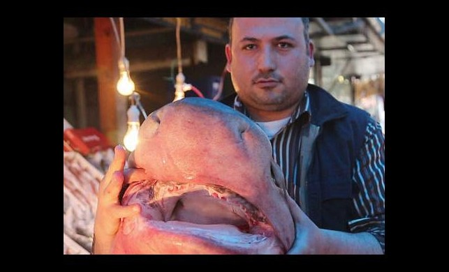 2.5 metrelik köpekbalığı yakalandı