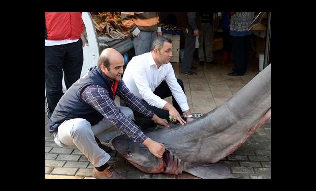 Bursa'da Dev Köpekbalığı!