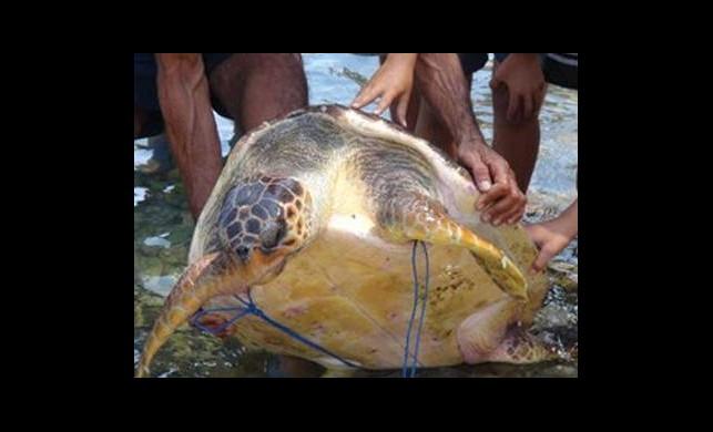 Mersin'de Kaplumbağa Saldırısı: 9 Yaralı
