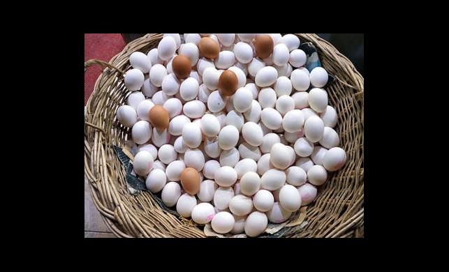 Bakkallar Artık Yumurta Satamayacak