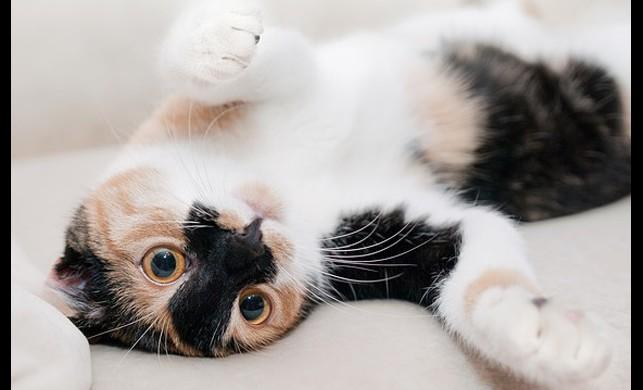 Evde Kedi Besleyenlerin Hayatını Kolaylaştıracak Öneriler