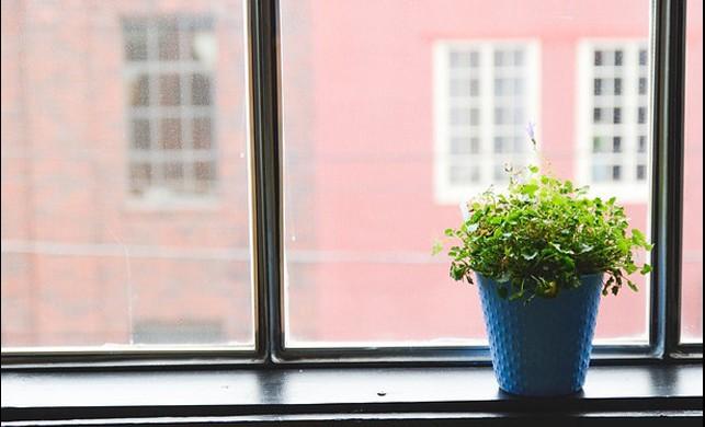 Gün Işığı Almayan Evlerde Yetiştirilecek 5 Bitki