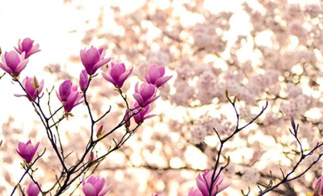 Nisan ayında gökyüzünde neler oluyor?