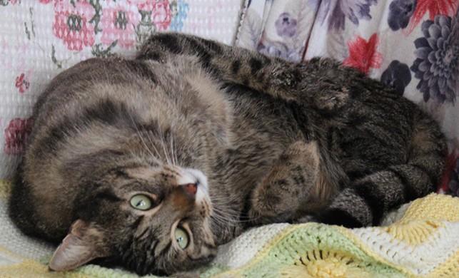 10 yıl önce buldu, felç kalan kediye gözü gibi bakıyor
