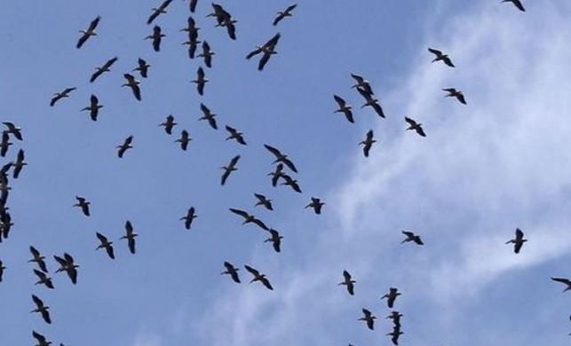 ABD'deki gökdelenler 600 milyon kuşu öldürdü
