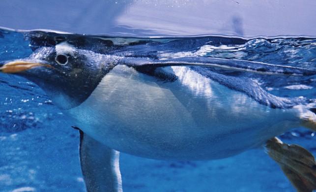 Dünyanın en büyük akvaryumunda yılda 25 ton balık tüketiliyor