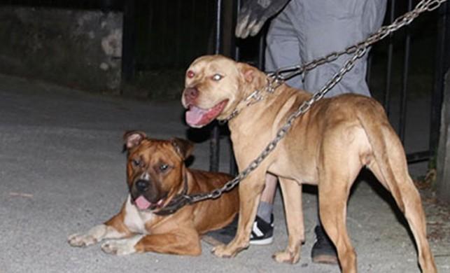 Çocuk parkında panik! Köpekleri zincirle bağladılar