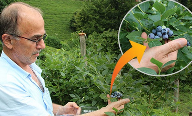 'Dünyada bu kadar gelir getiren ürün yok' Bahçesindeki çayı söküp yerine dikti