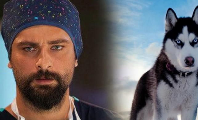 Mucize Doktor'un Ferman'ı Onur Tuna: Beni Sibirya kurduna da patatese de benzetebilirler hiç sorun değil