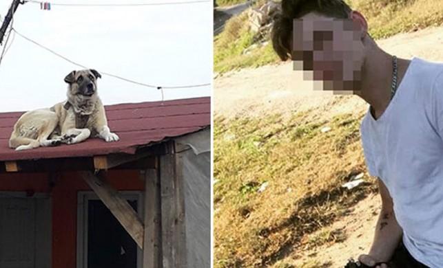 Komşusunun köpeğini tüfekle vuran gencin cezası belli oldu