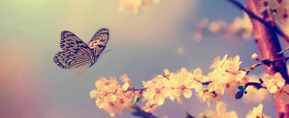 Kelebeklerin ömrü ne kadar sürer?