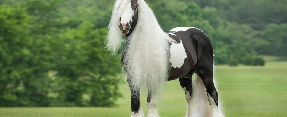 Nadir bulunan at cinsleri nelerdir?