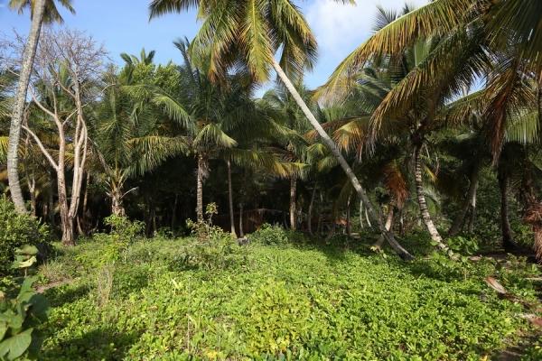 Survivor 2017 burada çekilecek! İşte Survivor adası....