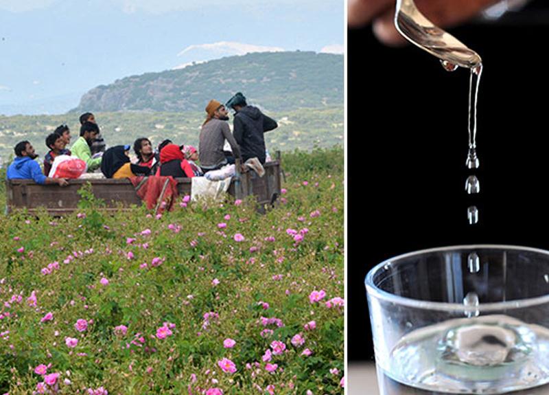 Dünyaca ünlü parfümlerde kullanılıyor... İlk satış 9 bin Euro!