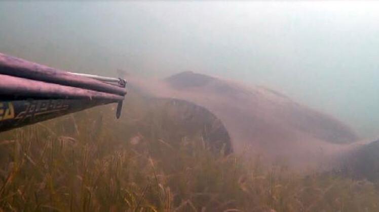 Çanakkale'de dev görüldü! Boyu 3 metre...