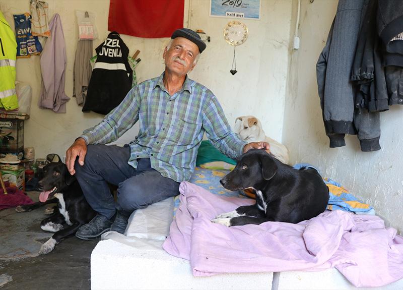 Hayatın zorluğunu 40 köpekle paylaşıyor