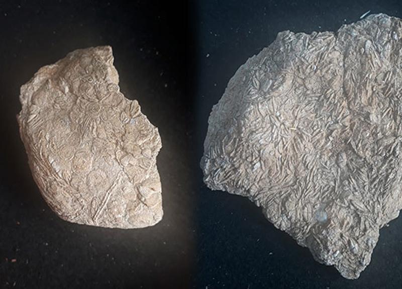 45 milyon yıl öncesine ait... Bulunan fosillerle yeniden gündem oldu