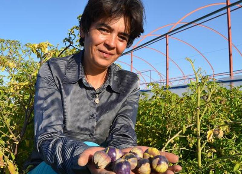 Tohumunu Çin'den getirdi! Resmen talep yağdı