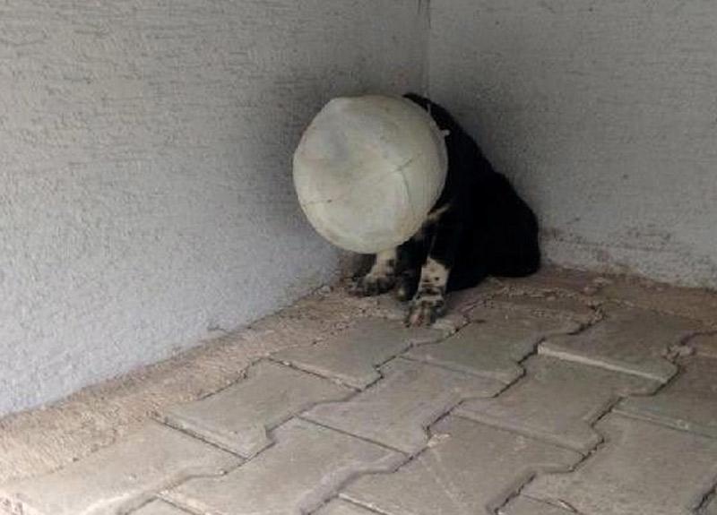 Yavru köpeği, başına bidon geçirip ölüme terk ettiler