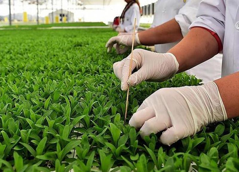 Bakanlık flaş hamle! 21 ilde tohumların yüzde 75'i hibe edilecek